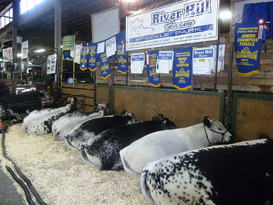 Some of the banners won by River Hill Farm at the 2011 Canadian Western Agribition